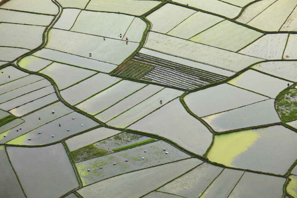 Rice field plantations in China - Backyard Travel