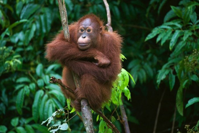 CROSS THE EQUATOR: SUMATRA'S CHARMS