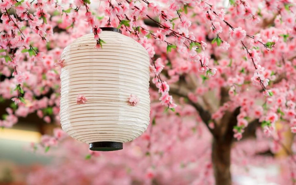Cherry Blossom In Japan 12 Useful Questions Answers You Need