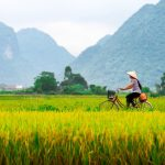 Local-woman-on-her-bicycle-along-a-rice-field.-People-in-Bac-Son-still-use-a-bicycle-as-their-communal-transportation