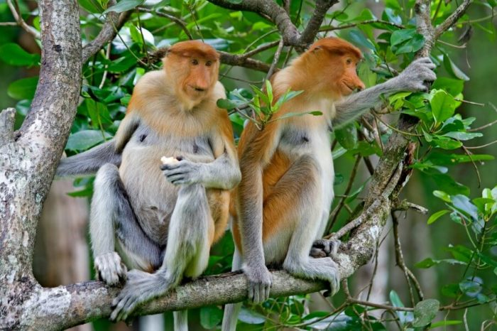 BORNEO WILDLIFE WATCH