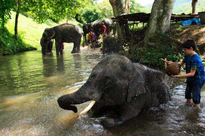 EXPERIENCE LAOS ELEPHANT CAMP TOUR