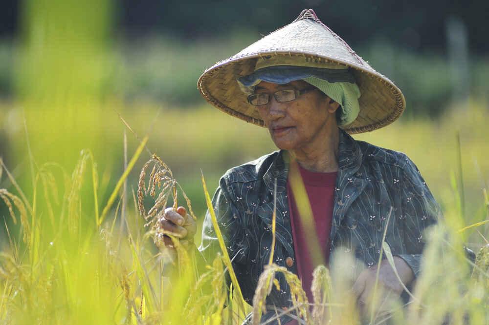 Malaysia People farmer