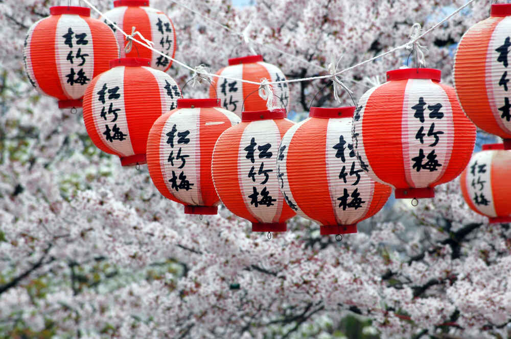 Japanese Lanterns and Cherry Blossom, Kyoto, Japan