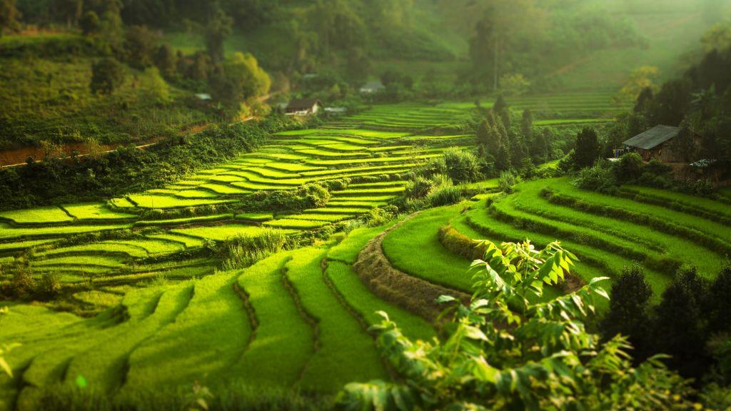 Rice paddies Vietnam