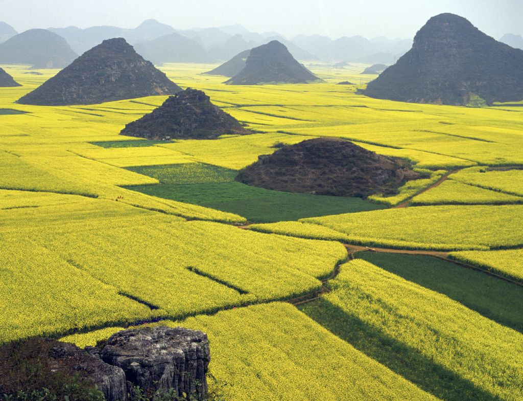 China - Yunnan - Rapeseed Field in Luoping