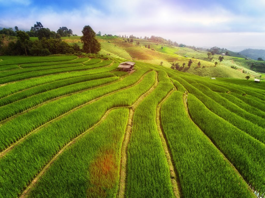 Terrace rice field from aerial view. Image of beautiful terrace rice field in Mae Cham, Chiang Mai, Thailand.