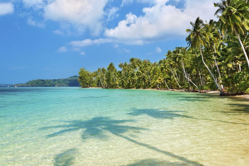 paradise beach in Thailand: palm trees and coastline of Koh Kood
