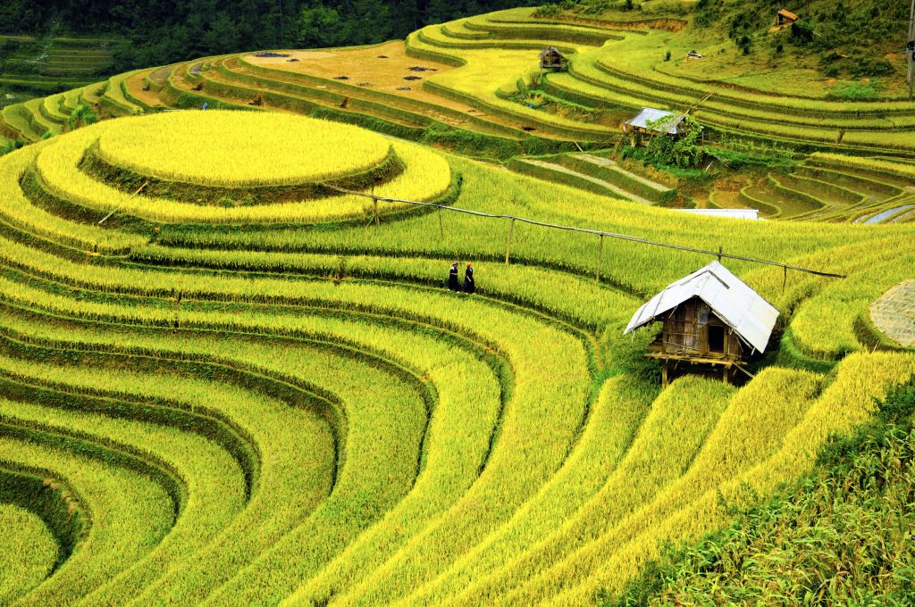 Vietnam: rice field landscape making the perfect honeymoon experience in Asia