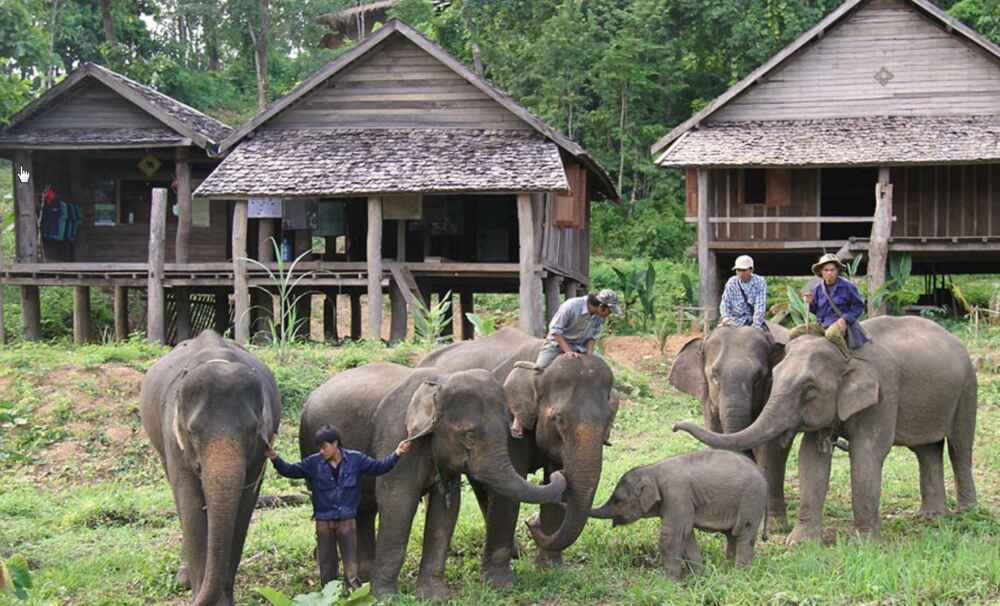 Laos Elephant Conservation Center Sayaboury 2