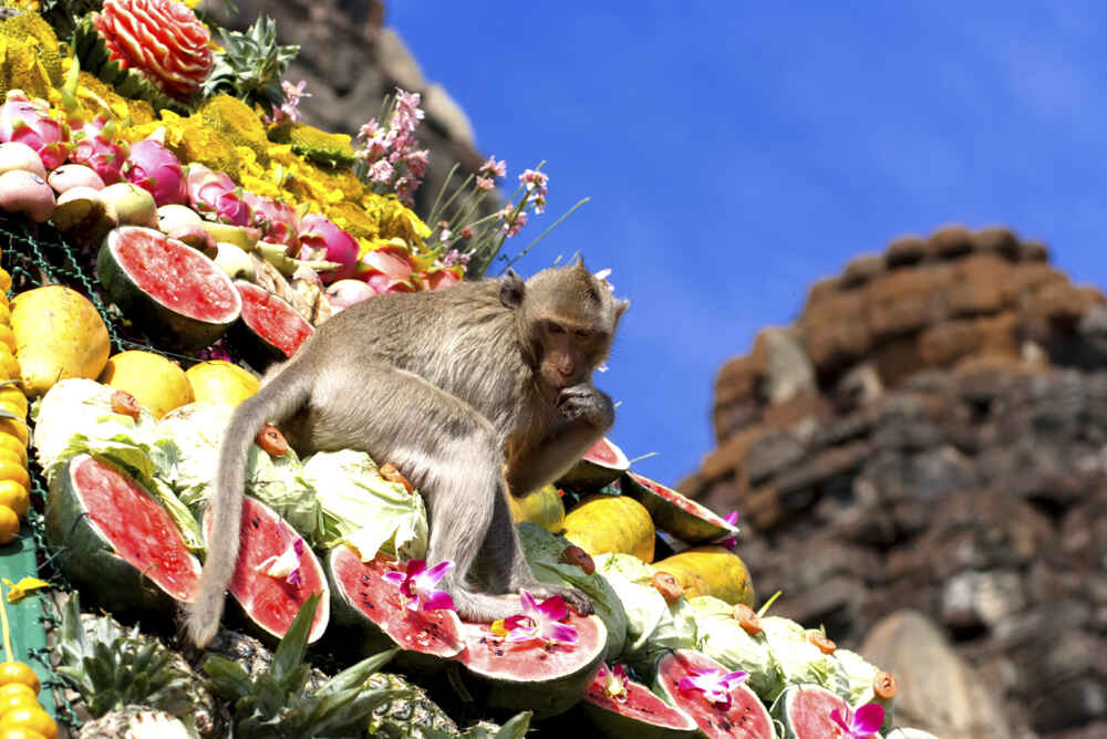 LopBuri Monkey buffet festival facts about thailand