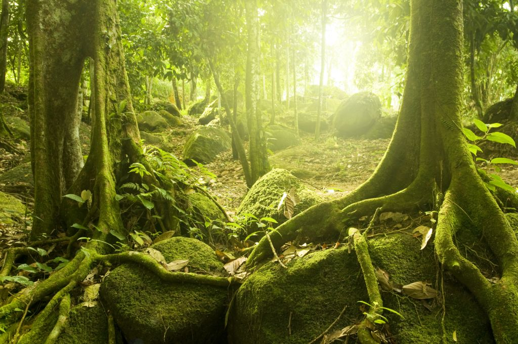 Facts about Borneo: Borneo has the most ancient rain forest in the world