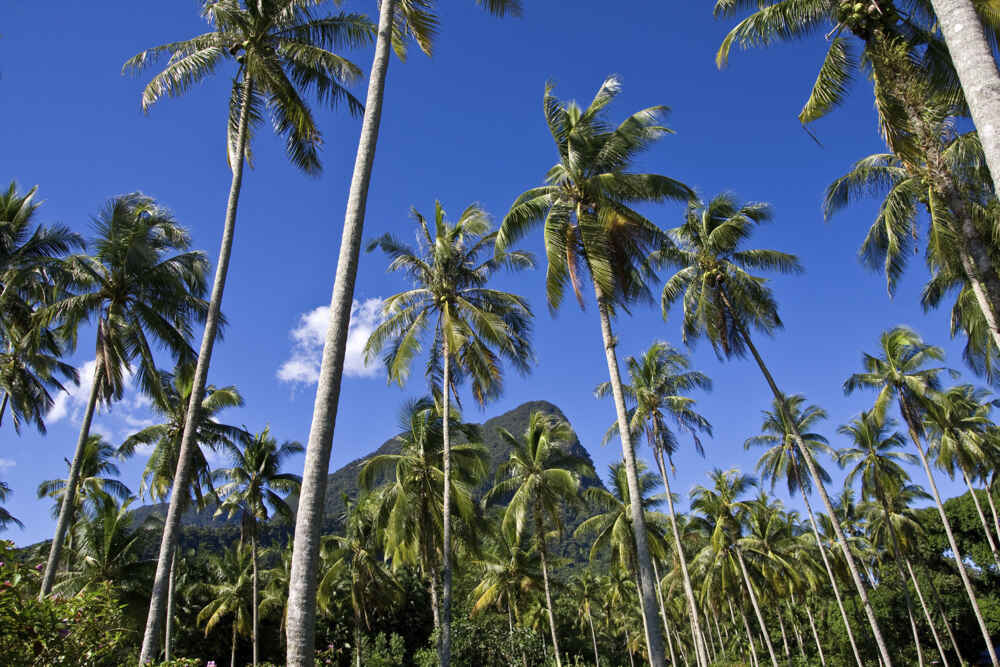Malaysia Borneo palm trees in sarawak Facts about borneo