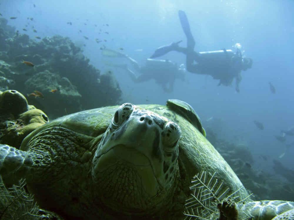 Malaysia Borneo scuba divers Facts about borneo