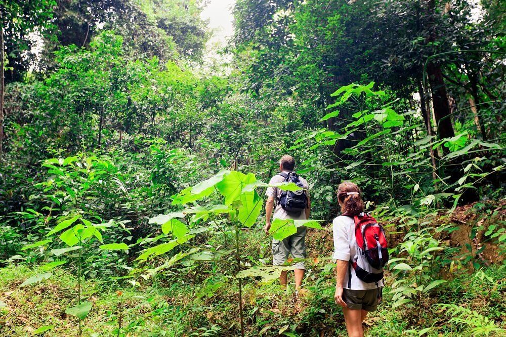 bespoke tours: hiking on the jungle