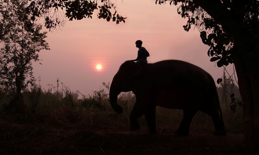A men rides a elephant in the sunset