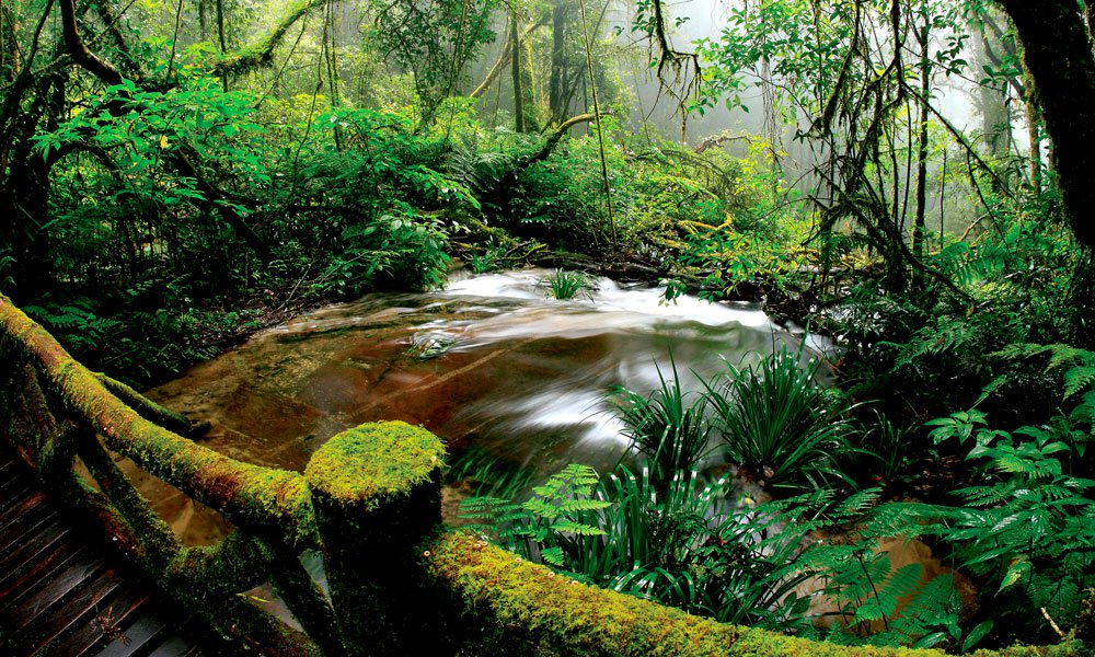 private tour Thailand: jungle and river