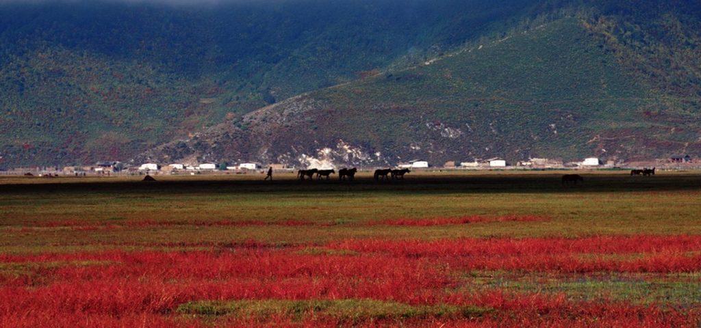 Luxury china tour: shangri la in autumn season