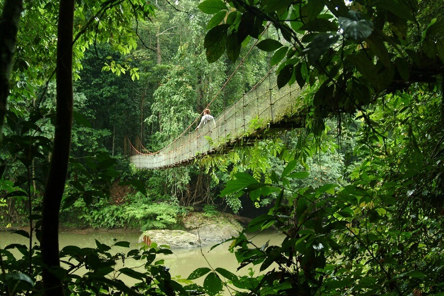 bridge in the jungle of Borneo