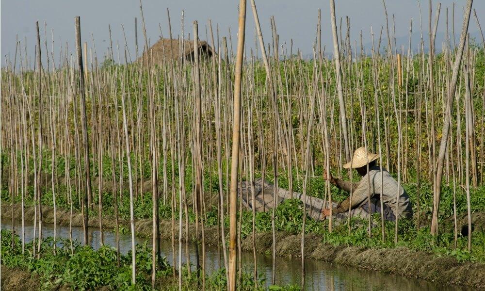 2 weeks in Myanmar: Inle lake local people