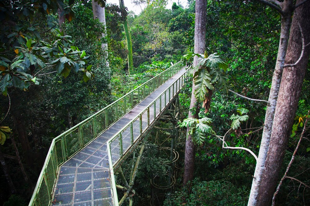 luxury tour of Borneo: suspended walkway on the jungle