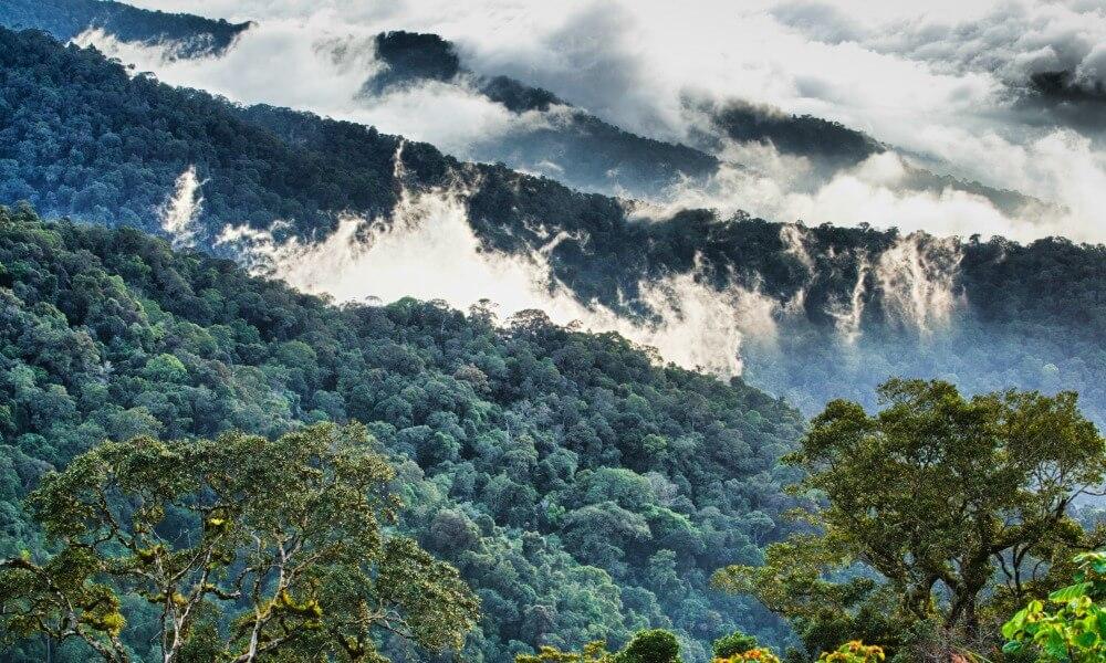 sabah luxury tour: Borneo rain forest