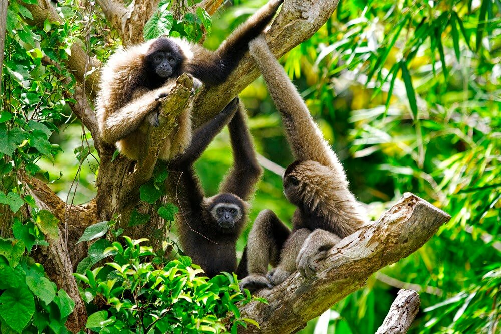 luxury tour of Borneo: family of monkeys in the jungle
