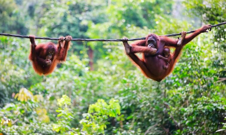 Borneo-Wildlife-Tour