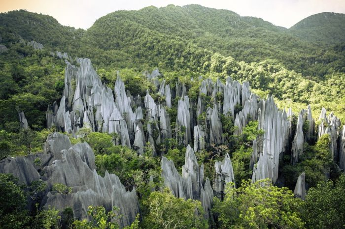 EPIC CAVES AND DENSE JUNGLES: A MULU NATIONAL PARK TOUR