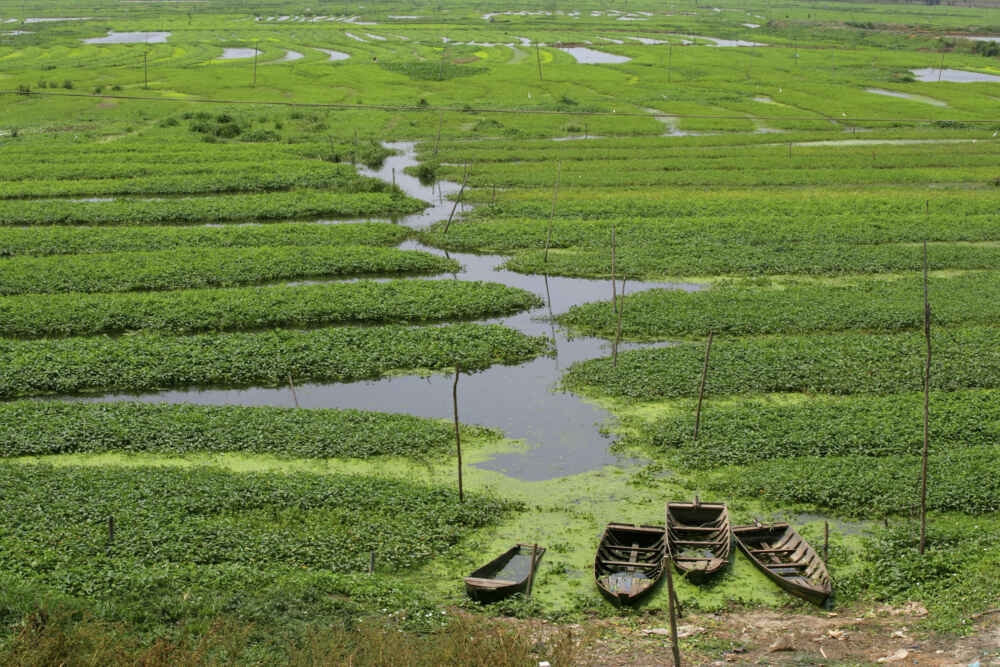 Rice fields in Cambodia
