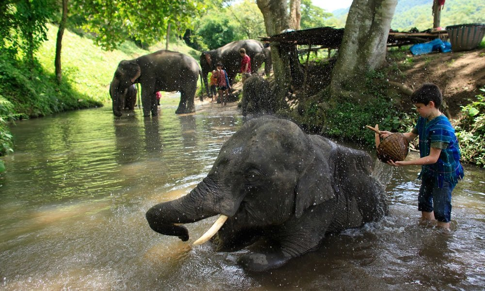 kids giving a bath to an baby elephant on the Golden Triangle Tour Thailand