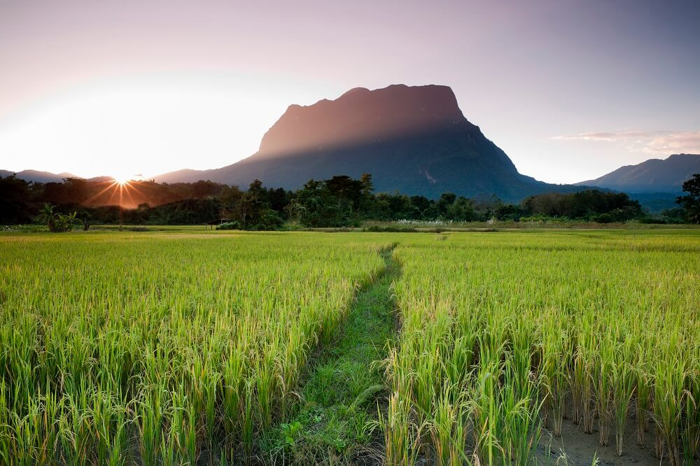 family holiday in Thailand: sun rise in a rice field