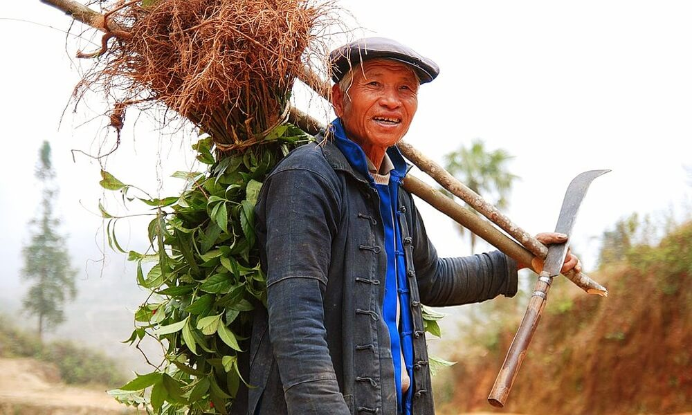Yuanyang hani farmer Xishuangbanna in China