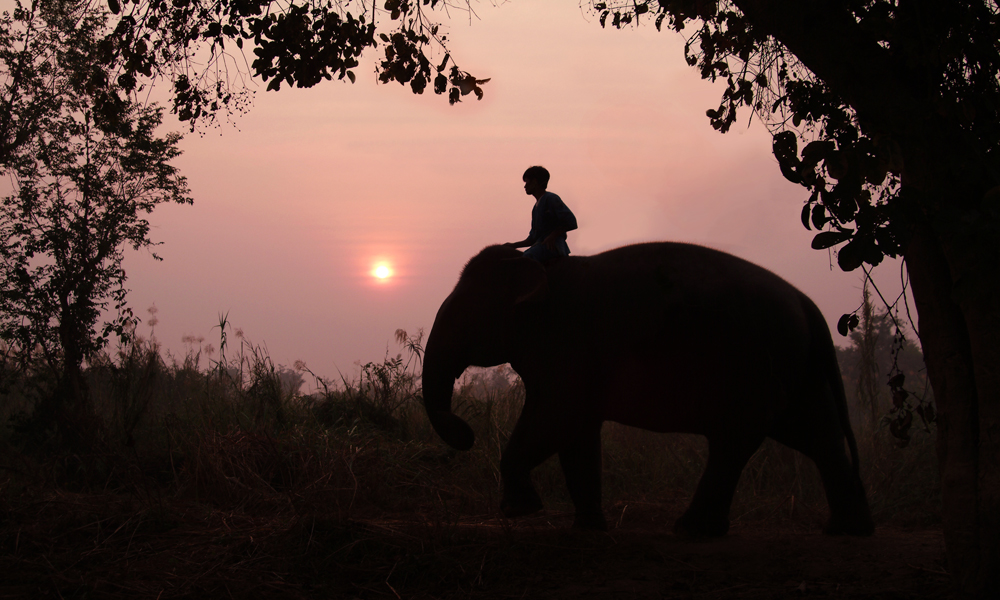 2-week Thailand tour: Men on an Elephant at the sunset