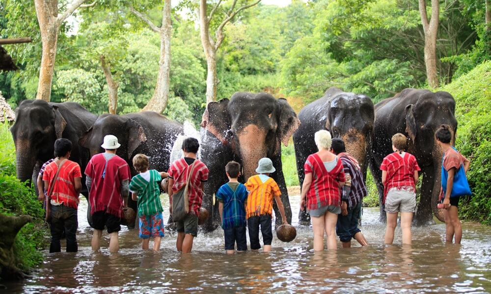 Kid shower elephants on a family holiday in Thailand