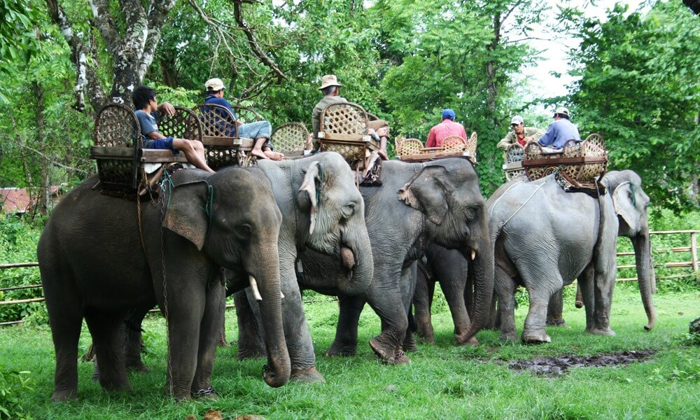 Laos-Elephant-Camp-Tour
