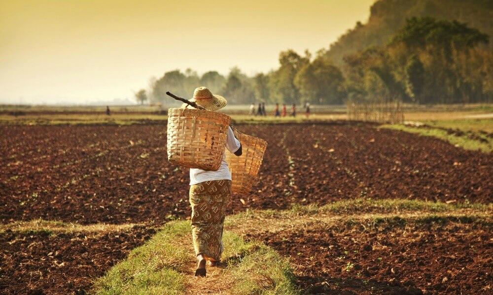 2 weeks in Myanmar: farmer woman