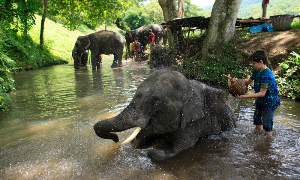 chiang-mai-family-adventure-with-elephants