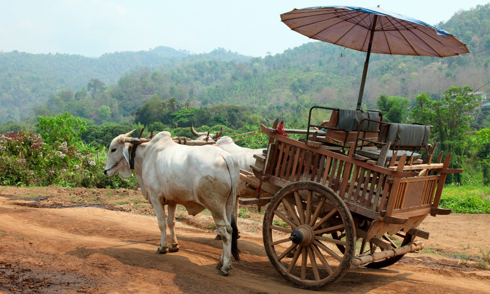 traditional oxcart in the Isaan Thailand tour