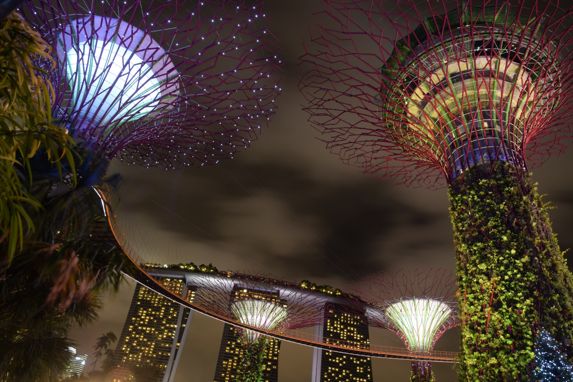 Best of Singapore - super tree at night time