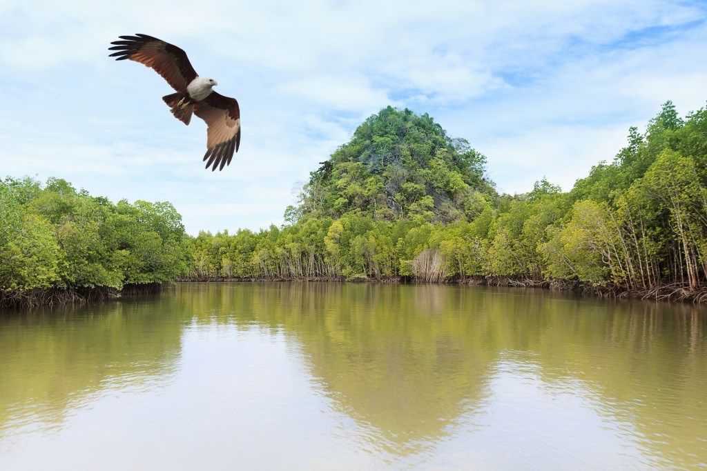 Best place to go in Malaysia with family: Langkawi - mangrove trees and red brown eagle on island, archipelago