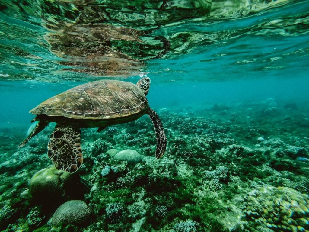 Turtle swimming in clear water on Perhentian Islands, Malaysia