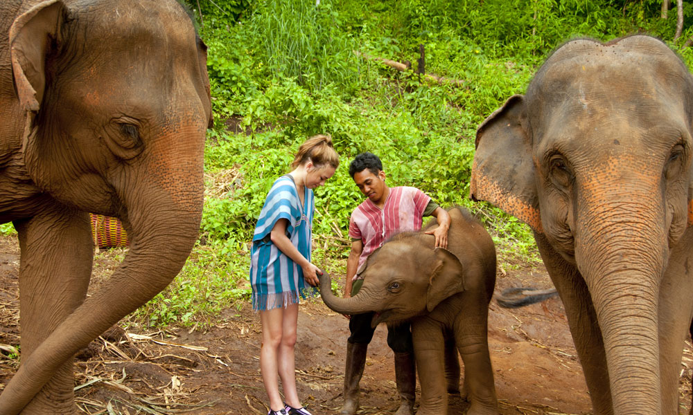 tourists feeding baby elephant and its parents at elephant camp
