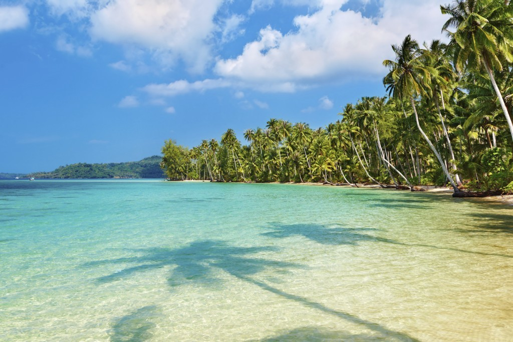 family holiday in Thailand: Koh Kood palm trees and coconuts