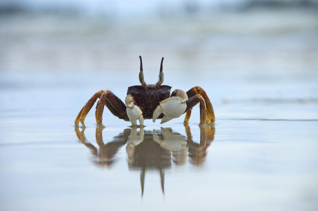 family holiday in Thailand: Krabi - crab on the beach