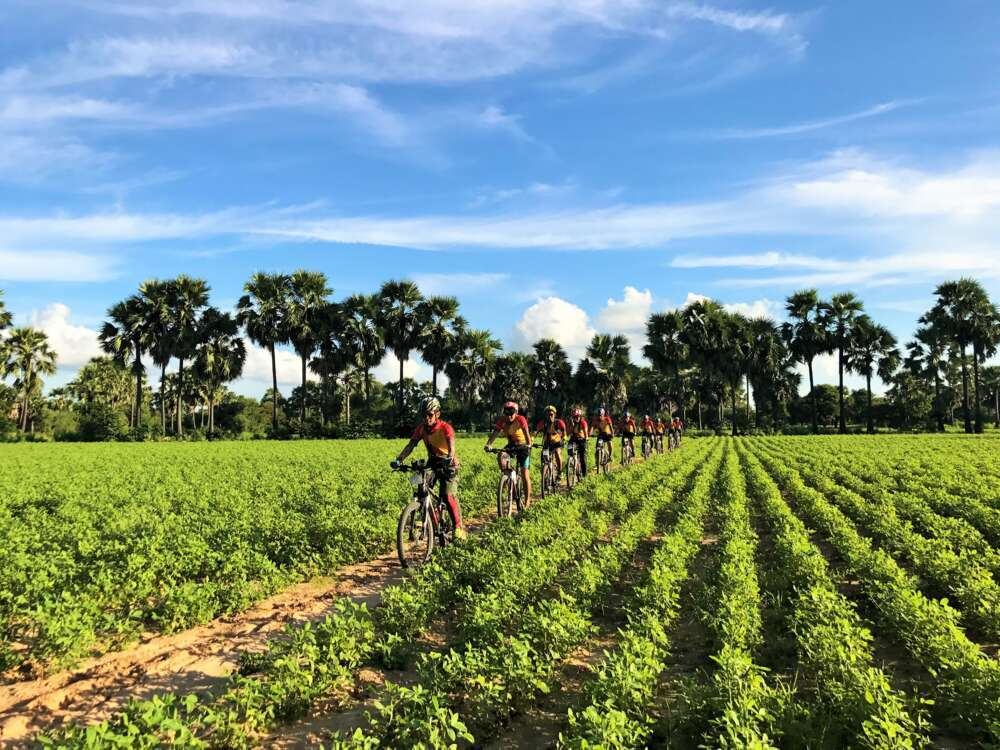 Myanmar family tour: people Cycling on the rice fields