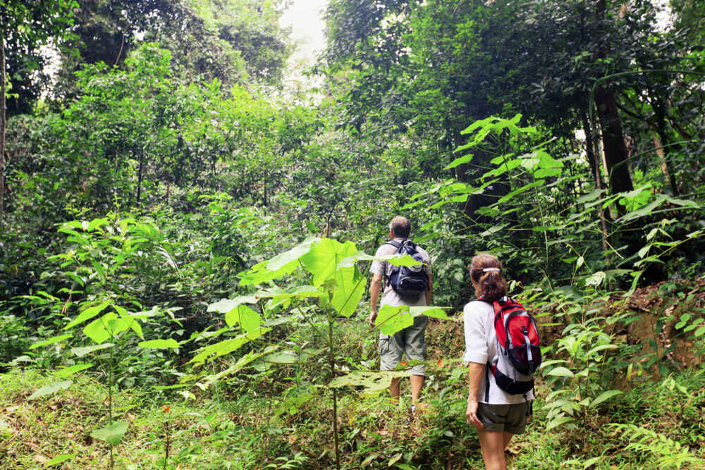 Northern Malaysia tour: couple hiking in the rain forest
