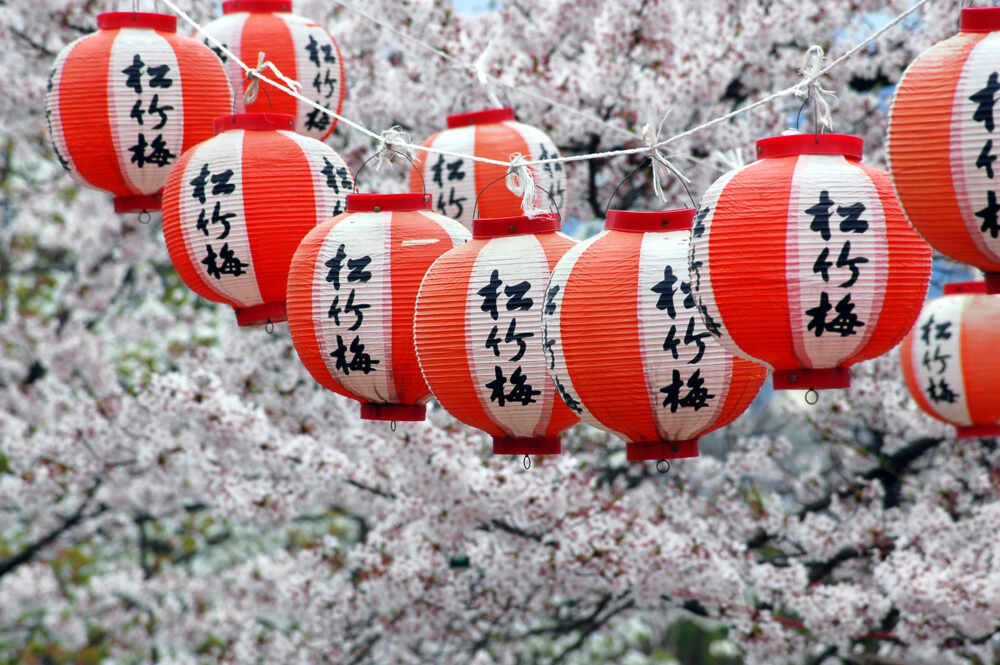 Okinawa private tour : Lanterns and Cherry Blossom