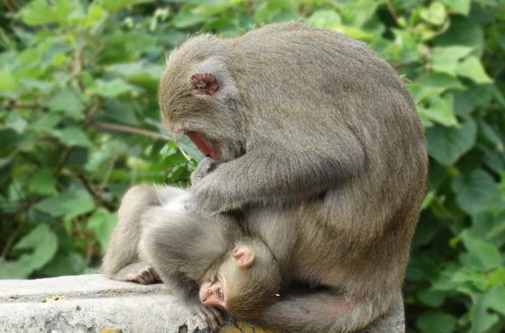 Taiwan monkeys at the park