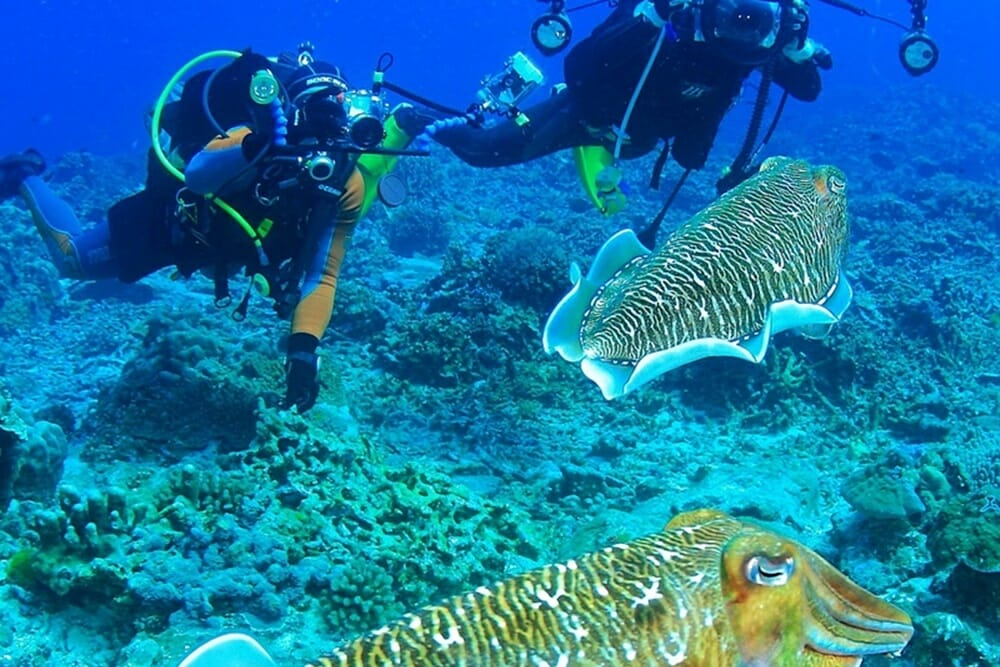 Okinawa private tour: Deep Sea Diving